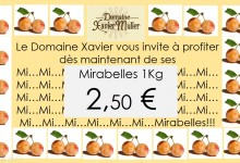 Affiche mailing mirabelles 2016